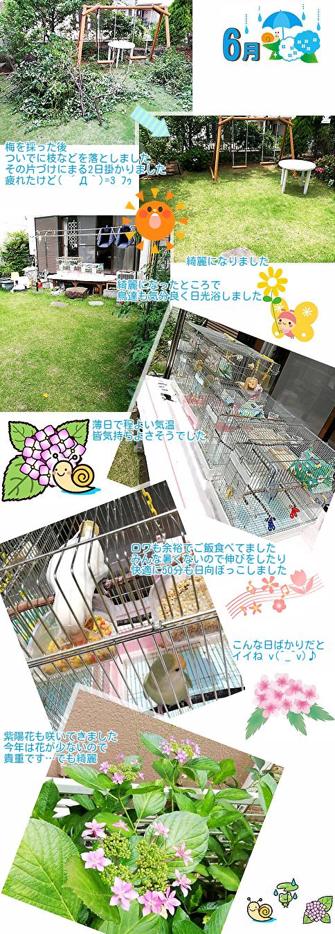 ①庭のごみ