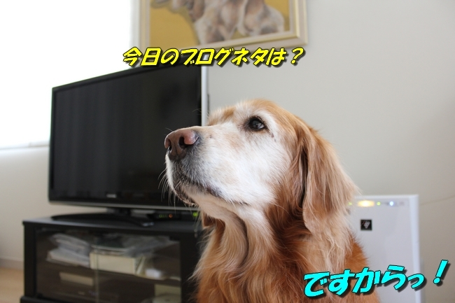 表情 018