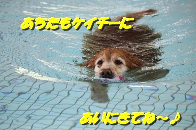 プリンとプールと表情 016