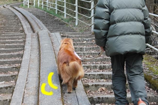 ロングお散歩 099