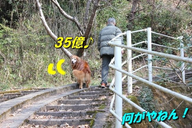 ロングお散歩 101