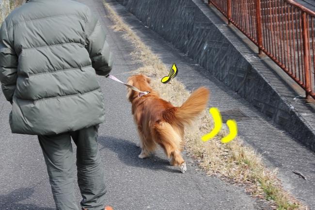 ロングお散歩 057