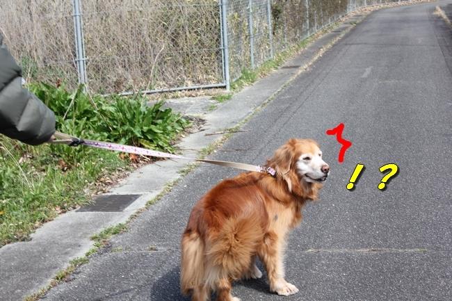 ロングお散歩 058