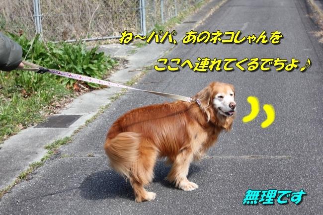 ロングお散歩 059