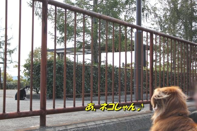 ロングお散歩 067