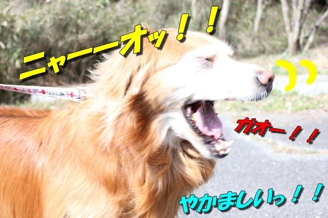 ロングお散歩 090