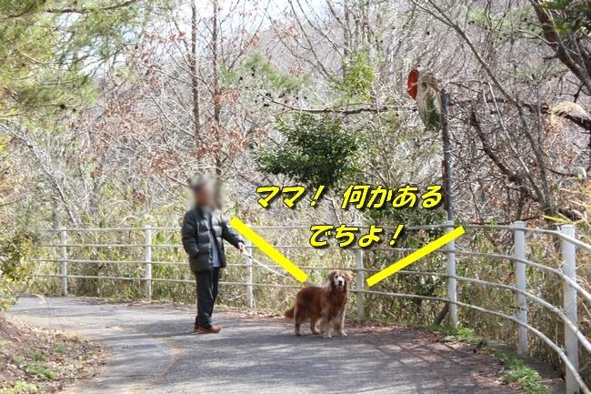 ロングお散歩 074