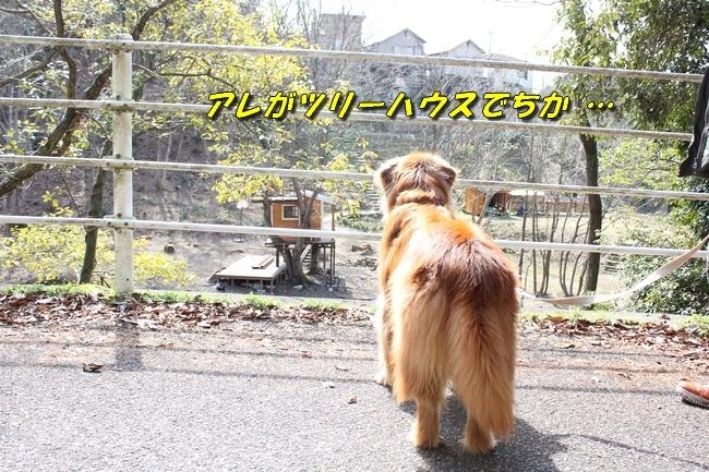 ロングお散歩 079