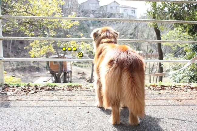 ロングお散歩 080