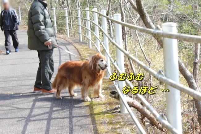 ロングお散歩 084