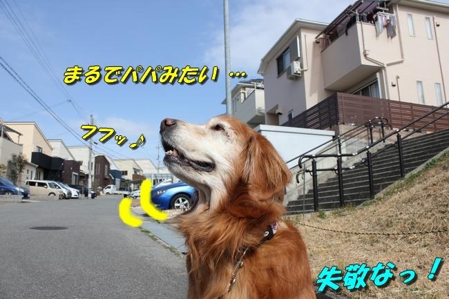 ロングお散歩 025