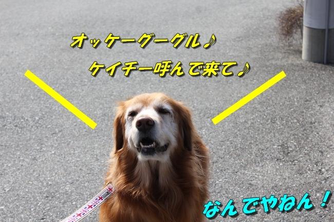 ロングお散歩 040