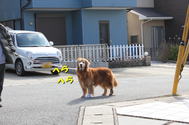 ロングお散歩 043