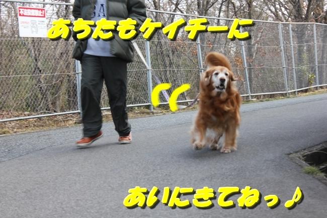 ロングお散歩 051