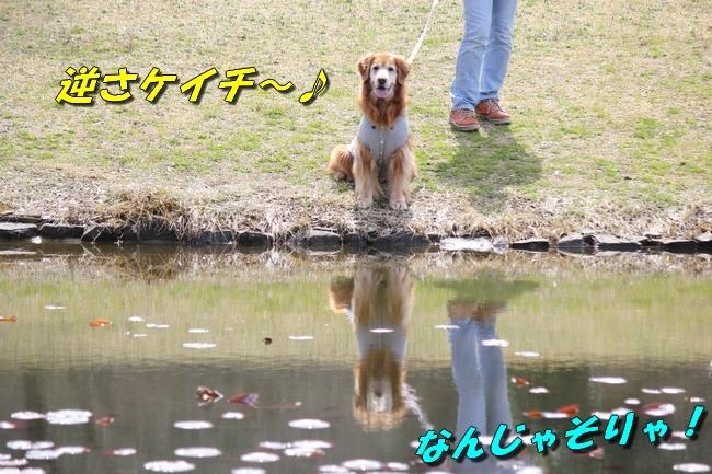 パパと三木山森林公園 041