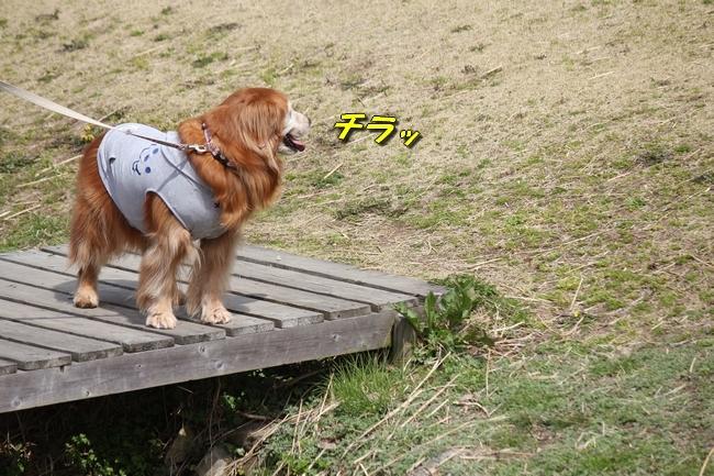 パパと三木山森林公園 079