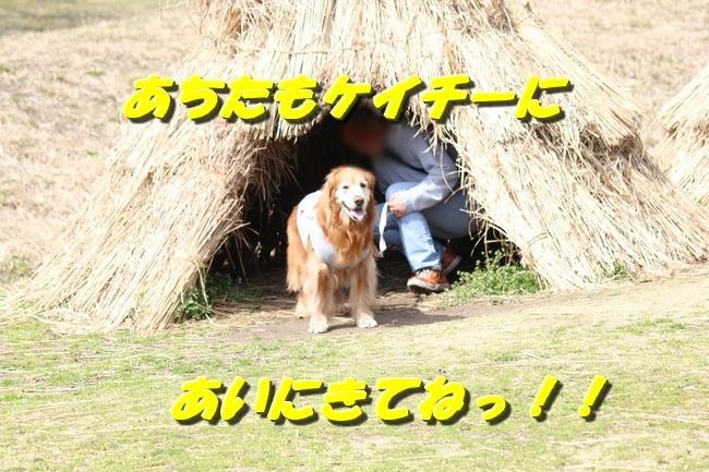 パパと三木山森林公園 086