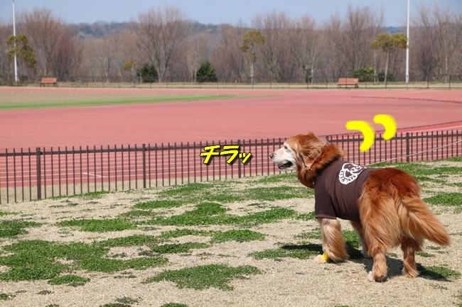 0404桜防災公園 011