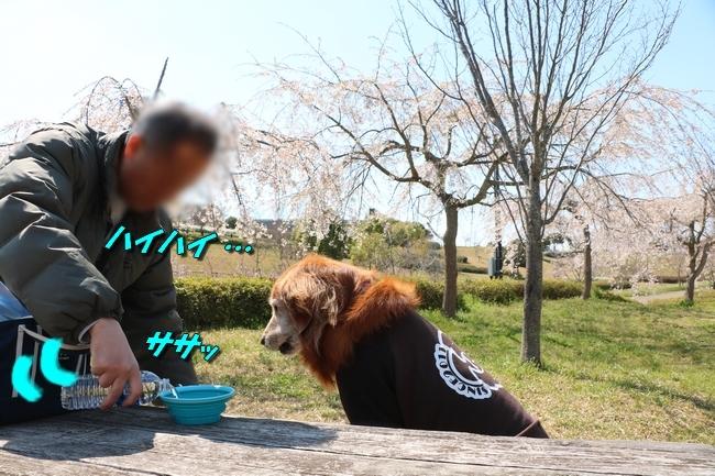 防災公園とTV表情 063