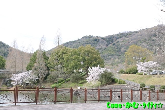 播磨中央公園の桜 001