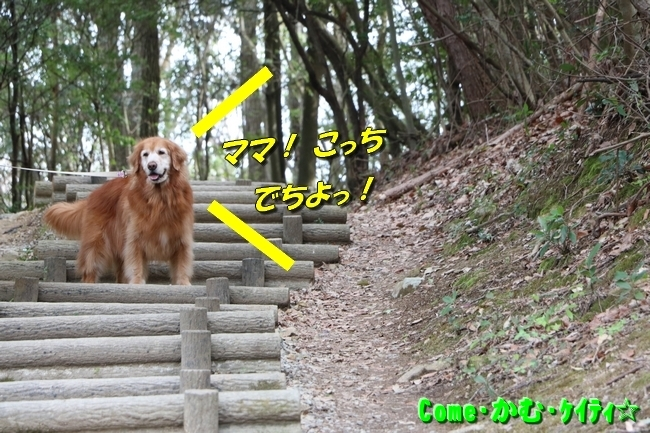 播磨中央公園の桜 003