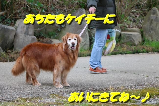 播磨中央公園の桜 289