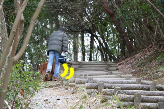 播磨中央公園の桜 002