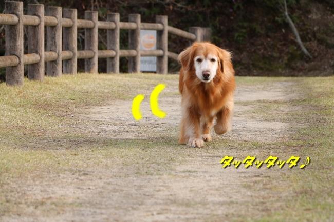 播磨中央公園の桜 322
