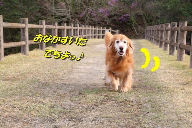 播磨中央公園の桜 328