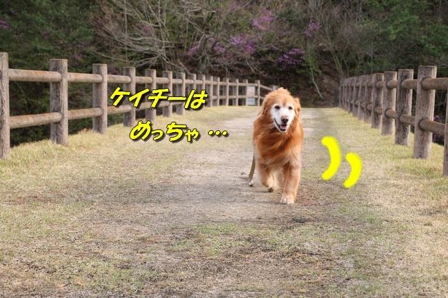 播磨中央公園の桜 326