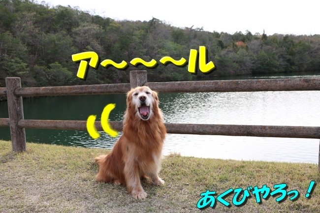 播磨中央公園の桜 312