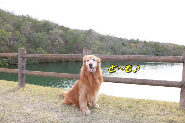 播磨中央公園の桜 315