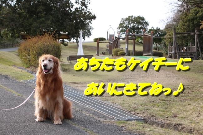 播磨中央公園の桜 339