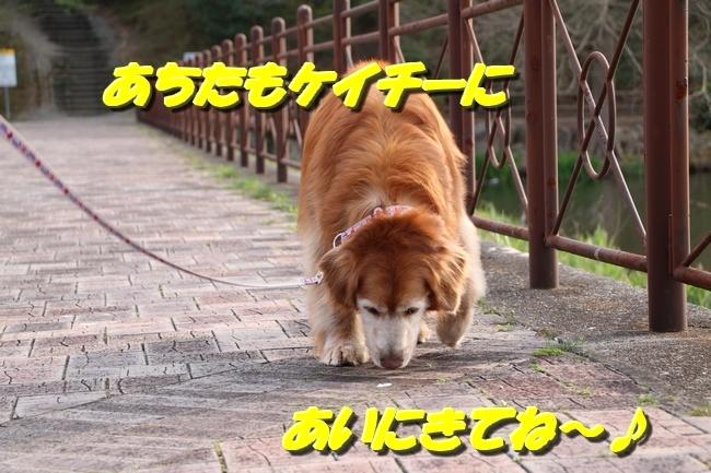 播磨中央公園の桜 369
