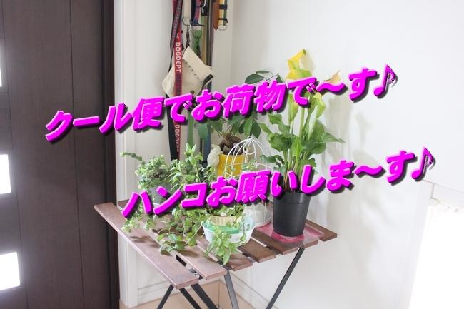 リンちゃんマックスくん 017