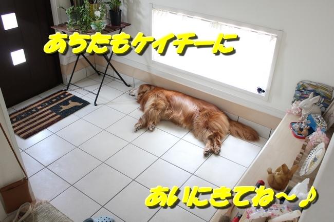 リンちゃんマックスくん 010