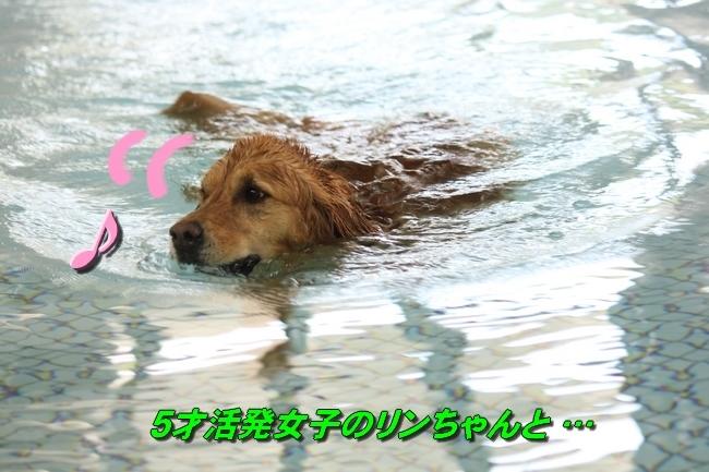 リンちゃんマックスくん 066