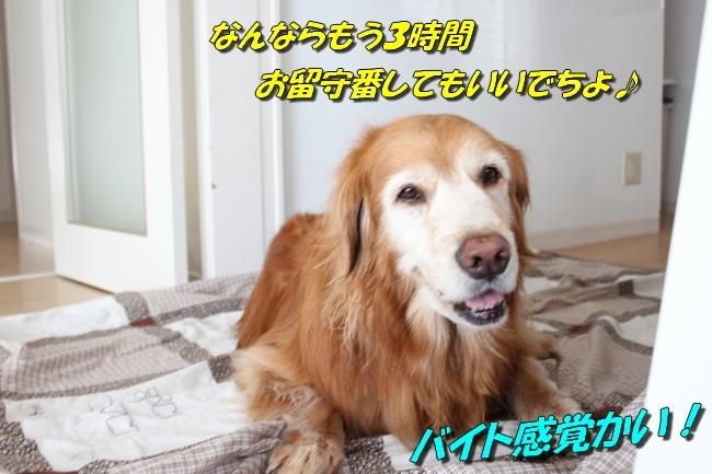うさぎぬいぐるみ鯛 030