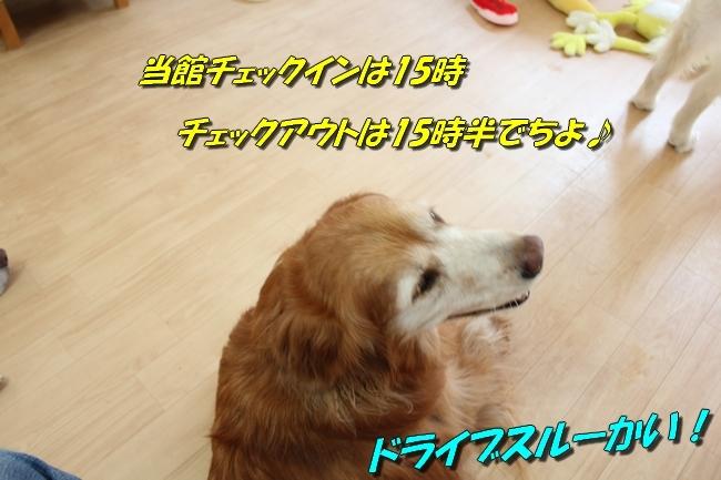 あづきちゃんJSDA オラ君ネット君イエール君 045