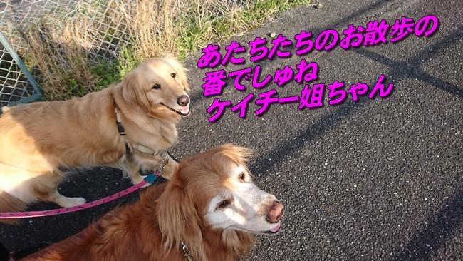DSC_2994.jpg