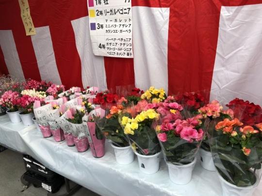 kuji20190405_006.jpg