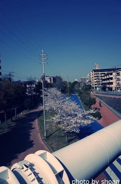 190409桜の日