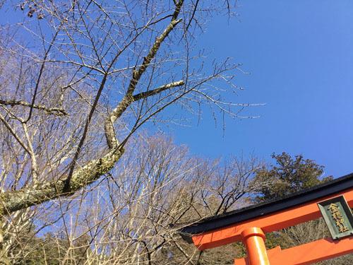 20190309金櫻神社下の鳥居付近 (4)