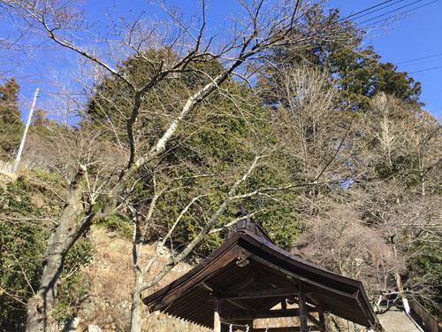 20190309金櫻神社下の鳥居付近 (1)