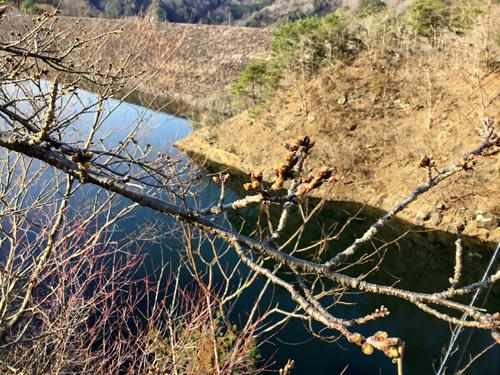 20190317 荒川ダムの桜 (2)