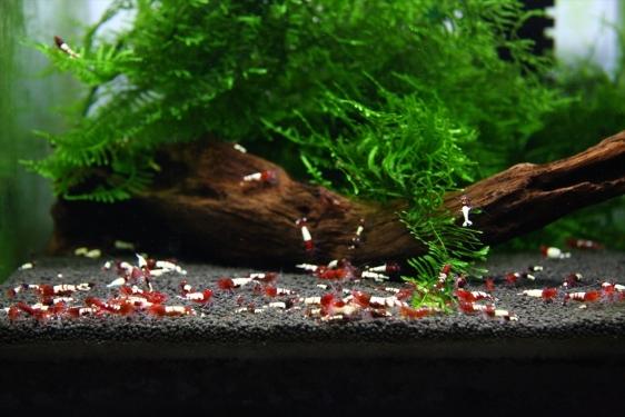shrimp cafe_2191
