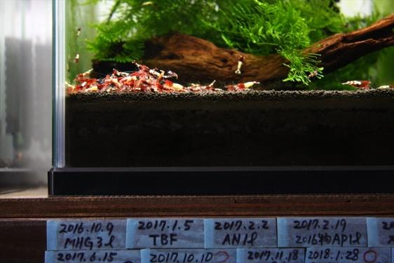 shrimp cafe_2189