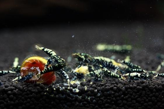shrimp cafe_2198
