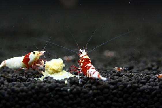 shrimp cafe_2205