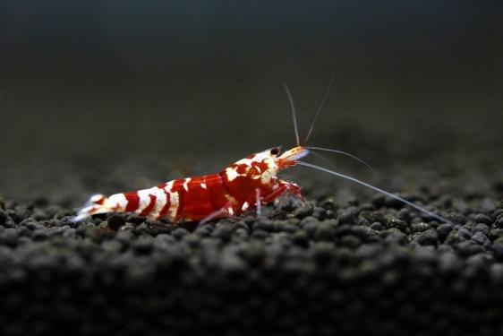 shrimp cafe_2237